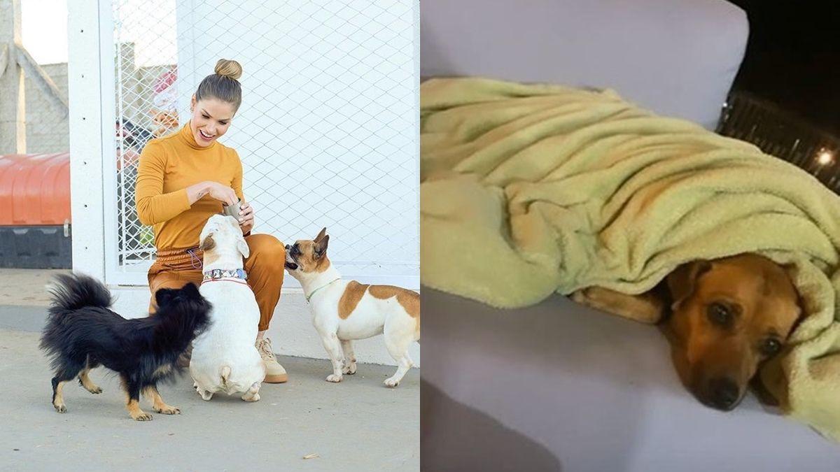 Andressa Suita esclarece porque não tirou fotos com cadela vira-lata na fazenda em Goiânia
